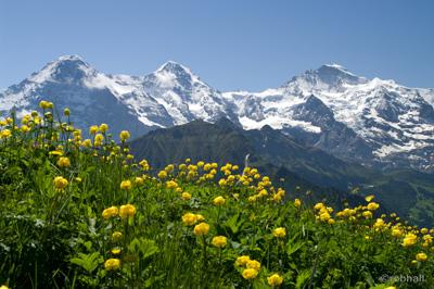 Jungfrau-Region_sm