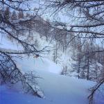 Powder_snowboarder